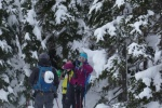 ski touring the trees IIIecillewaet Valley Tours